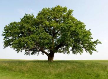 """""""Стефаново дрво"""" – питања за групни облик рада"""