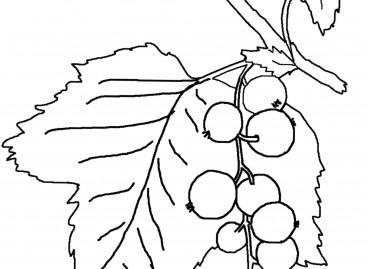 Воће – бојанка (шаблон)