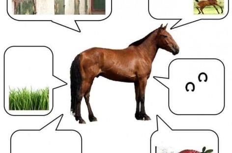 Све о животињама (у сликама)