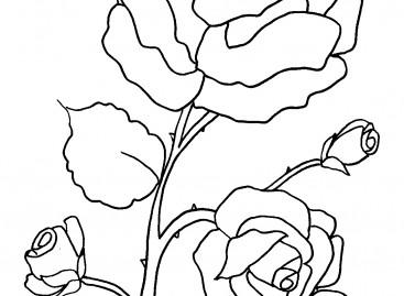 Цвет – бојанка