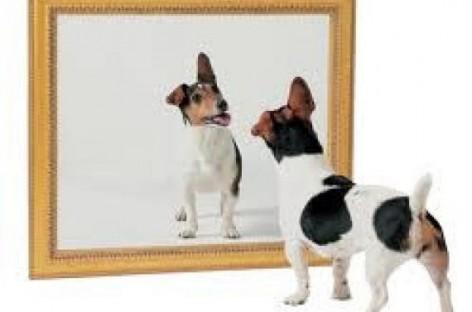 Oгледало – поучна прича