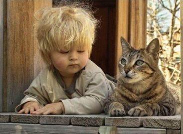 Како одабрати кућног љубимца за дете