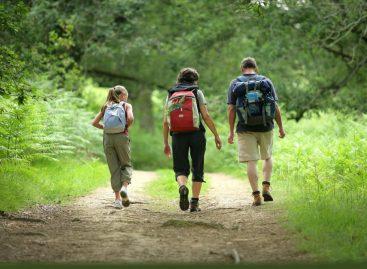 Од природе нема боље теретане: Шта је шумска медицина?
