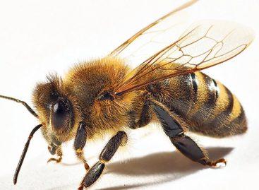 Занимљивости: 15 занимљивих чињеница о пчелама