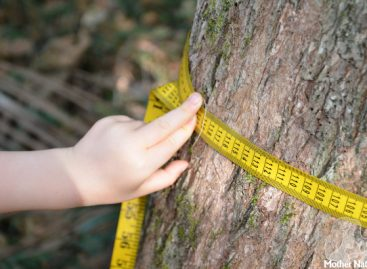 Дан у природи: Научите дете да израчуна колико је старо дрво (иако се годови не виде)