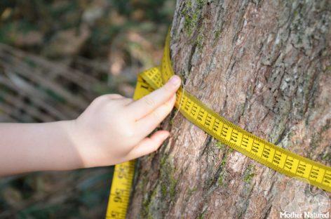 Dan u prirodi: Naučite dete da izračuna koliko je staro drvo (iako se godovi ne vide)