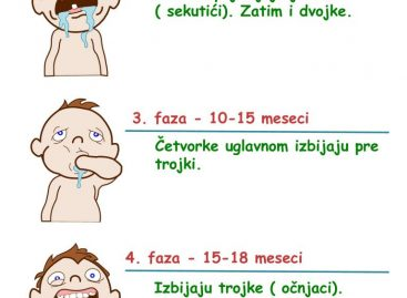 5 фаза ницања зуба