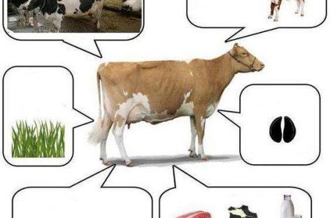 Sve o životinjama u slikama