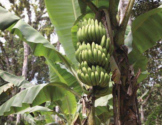 Zdrava zemlja pruža zdravo voće i povrće