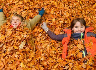 Састави о јесени (одабрани радови са конкурса – други разред)